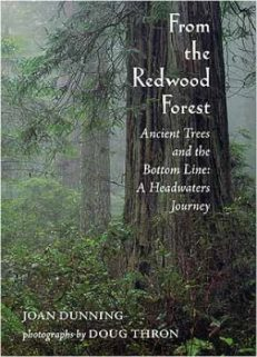 From the Redwood Forest