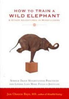 How To Train A Wild Elephant
