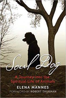 Soul Dog